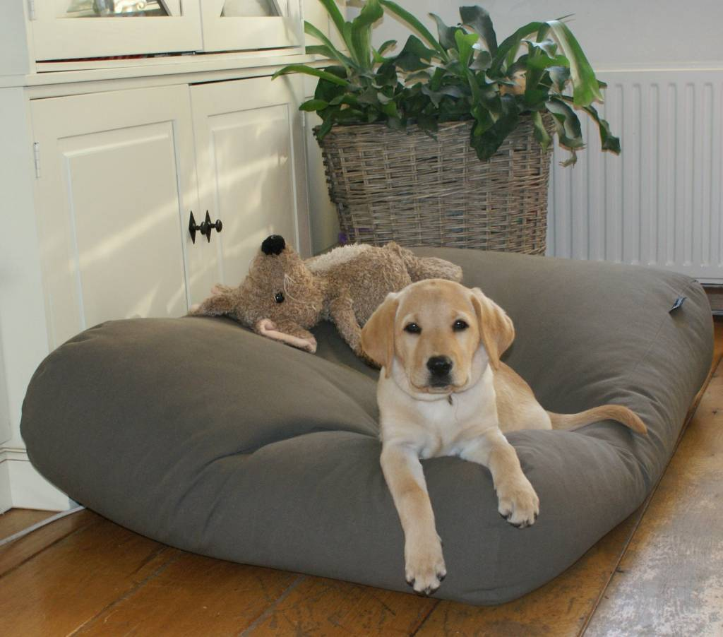 Cotton Canvas Dog Bed