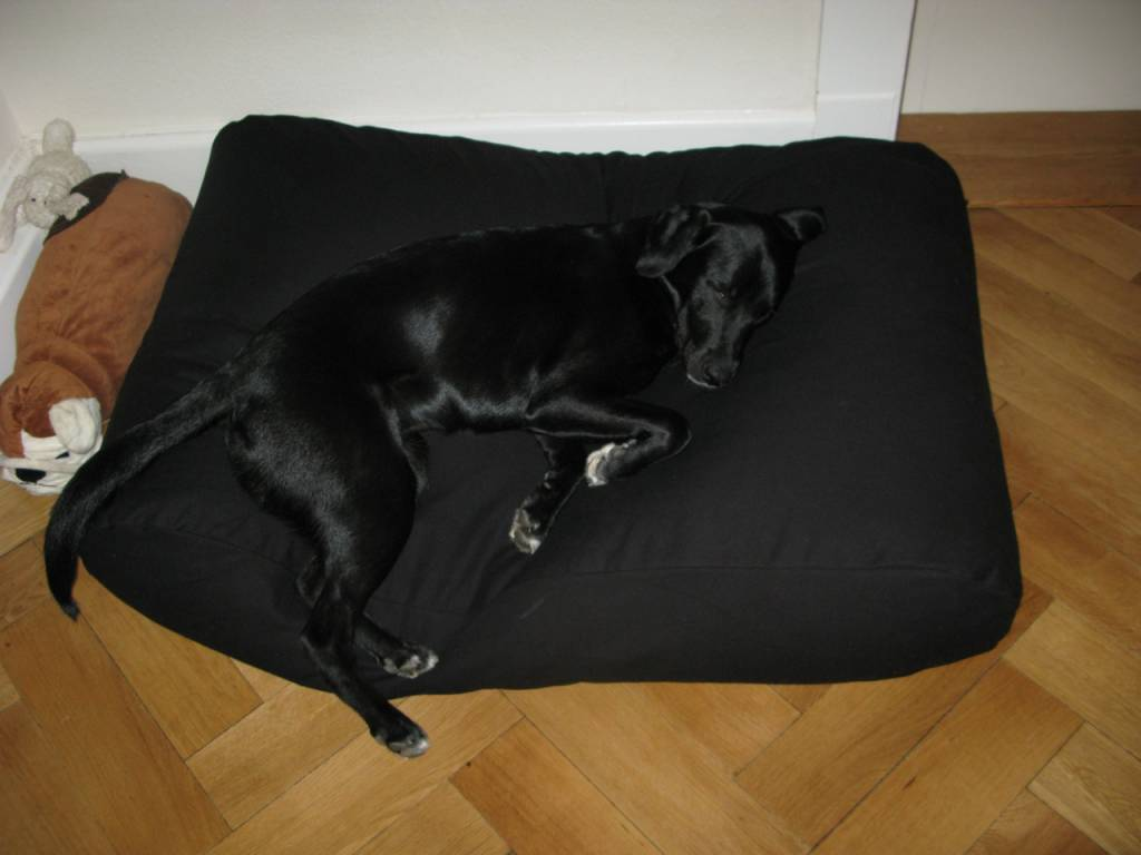 Dog Bed Black Dog Beds By Dog S Companion 174