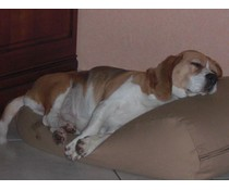 Dog's Companion® Dog bed Camel
