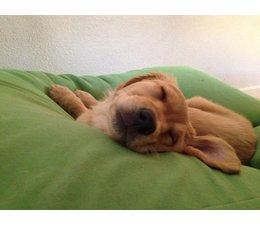 Dog's Companion® Dog bed Apple Green