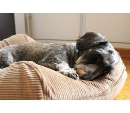 Dog's Companion® Dog bed Camel (Corduroy)
