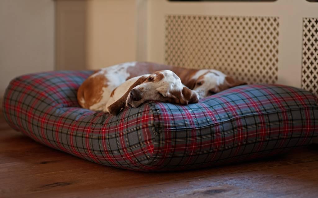 Schöne Hundebetten hundebett ein schönes hundebett hundebett ch hundebetten