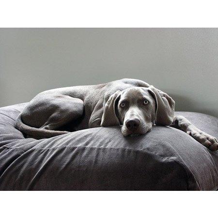 lit pour chien gris souris corduroy lits pour chien de dog s companion. Black Bedroom Furniture Sets. Home Design Ideas