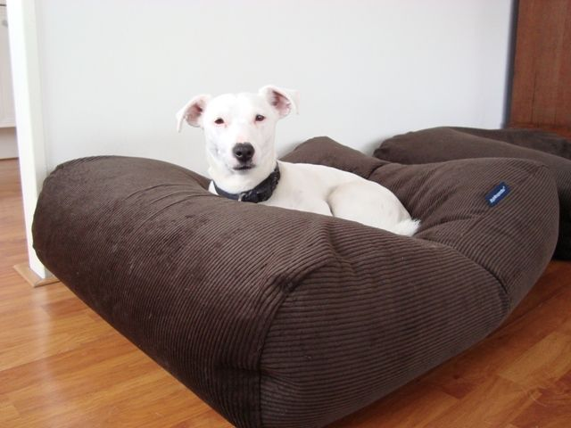 Coussin pour grand chien Chocolat (corduroy) | Lits pour chien de ...