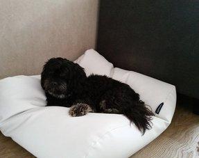 Lits pour chiens Look en cuir (leatherlook)