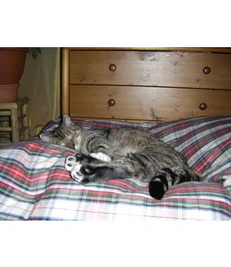 Dog's Companion® Cat bed dress stewart