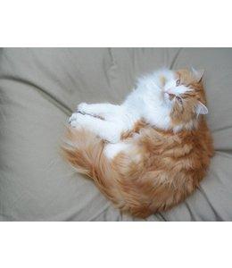 Dog's Companion Cat bed beige