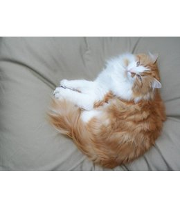 Dog's Companion® Katzenkissen beige
