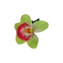 Haarbloem Orchidee Lichtgroen