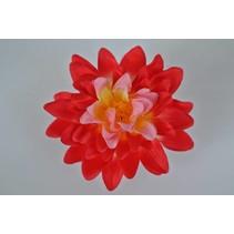 Haarbloem Dahlia Rood/Roze