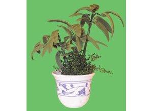 Euromini's Pot met planten