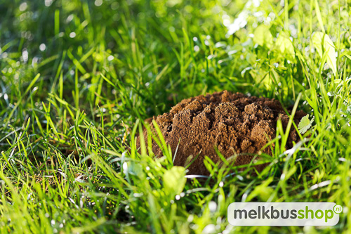 mollen verjagen met flessen, mollen verjagen met geluid, mollen verjagen geluid - Molshoop in het gras