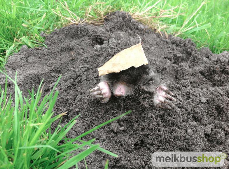 mollen in de tuin, mol in de tuin, mollengang, planten tegen mollen, mollen in tuin, mol tuin, mollengangen