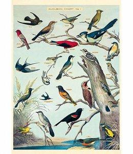 Cavallini & Co Poster/cadeaupapier - Vogels