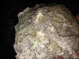Levend steen per kilo