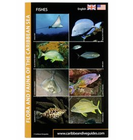 Fish ID card Caribbean