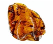 Large pieces of amber