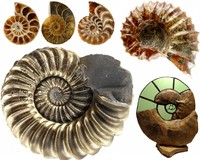Ammonites in many forms and sizes