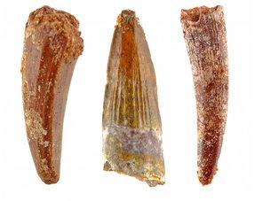 Pterosauriër tanden