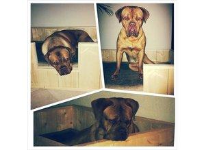 Hondenmand Standaard