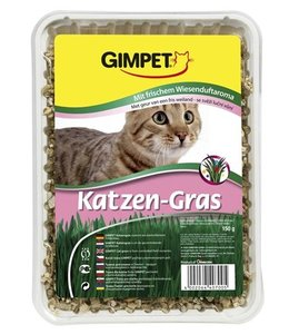Gimcat kattengras