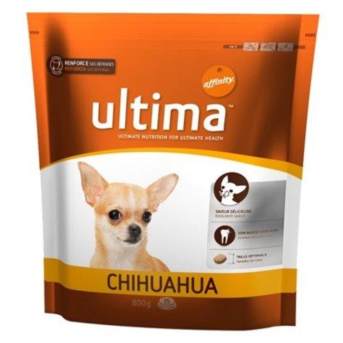 Ultima chihuahua