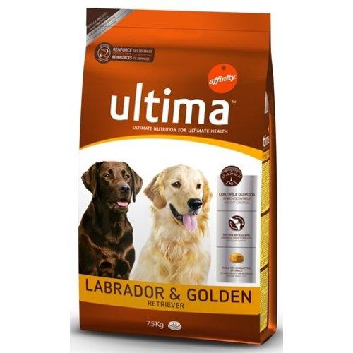Ultima labrador / golden retriever