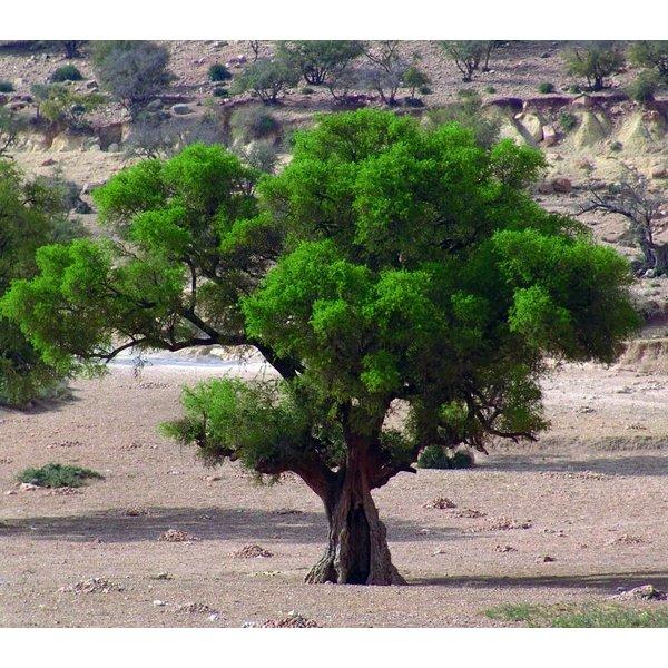 Biologisch Serum van Argan- en Cactusvijgolie