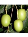 Biologisch serum rosacea en couperose