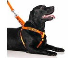 Friendly Dog Collars No Dogs Dog Harness