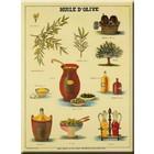 Cartexpo Schoolkaart olijfolie 50x70
