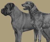Zeer grote honden