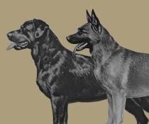 Grote honden