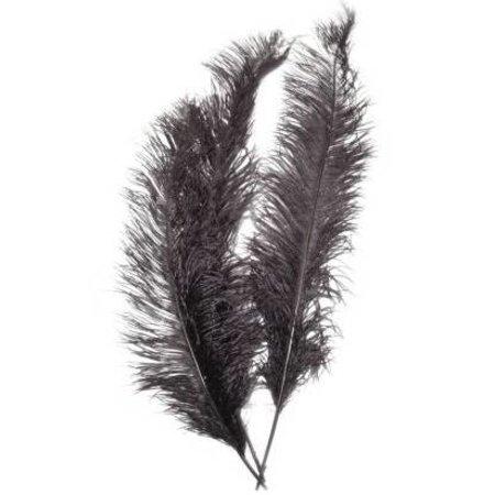 Veer spadonis zwart