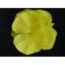 Hawaii bloem op kam Geel