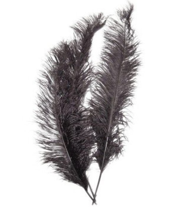 Spadonis zwart