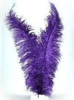 Spadonis paars