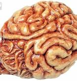 Decoratieve hersenen