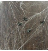 Spinnenweb met 6 spinnen
