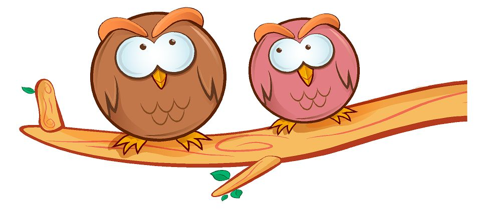 Crazy owls 1 (gekke uilen) full color muursticker