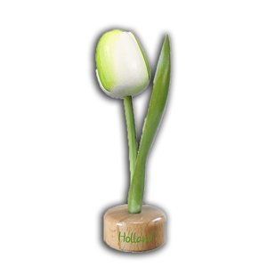 Typisch Hollands Tulip on Foot
