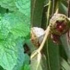 Odeur de Vie Eucalyptus-Mint stoombad milk 1 Liter