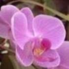 Odeur de Vie Orchidee stoombad milk 1 Liter