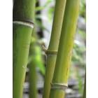 Odeur de Vie Opgiet Bamboe