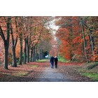 Odeur de Vie Forest Walk