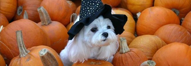 De grappigste Halloween kostuums voor je huisdier!