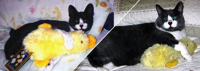 Huisdieren en hun knuffels: friends forever