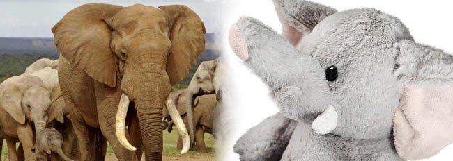 Fijne Wereld Olifantendag! Wat je nog niet wist over de olifant.