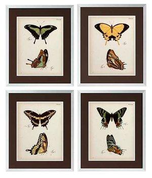 Eichholtz Schmetterlings Drucke eingerahmt - 4-er Set