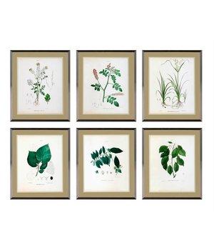Eichholtz Botanische prints ingelijst - set van 6